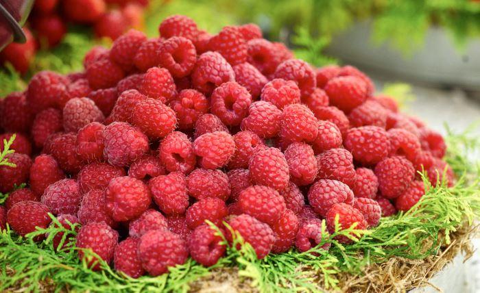 Hallon, Rubus idaeus