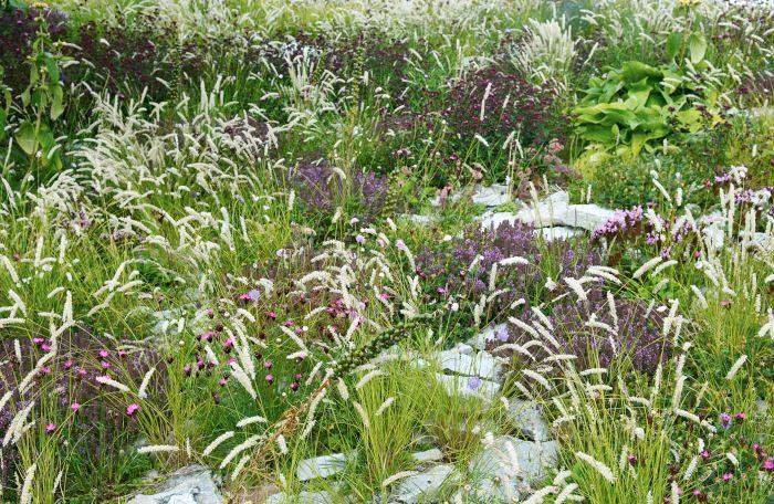Grusslok. Melica ciliata, brödranejlika. Dianthus carthusianorum, stortimjan, Thymus pulegioides, och hybridmejram, Origanum 'Rosenkuppel'