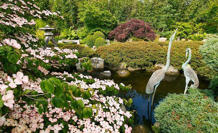 På den andra sidan dammen breder kurumeazaleorna ut sig på ett självklart sätt. Stenarna i vattnet ser ut som om de förts dit av strömmarna. I förgrunden blommar en hybrid av koreansk blomsterkornell.