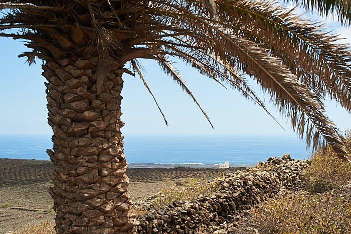 På många bilder från Monte Corona finns en palm med. Det är alltid den här, fler finns inte på den här sidan vulkanen.