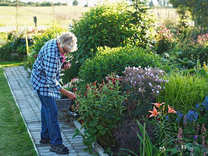 Fint ska det vara i trädgården, inte en massa ogräs och fult. Vill man få bättre blomning hjälper det att plocka bort det som blommat ut.