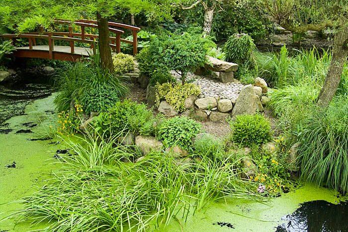 Över vatten vandrar man på broar. Det kan vara en bågbro ut till en ö i dammen som i det här fallet, eller kanske några breda plankor eller en enkel brygga. Variationerna på broar i japanska trädgårdar är stor.