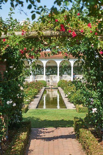 Besöksrosariet hos världens främste rosförädlare David Austin i Albrighton mellan Shrewsbury och Birmingham.