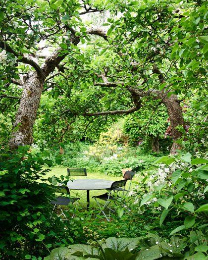 I den trädgård som trädgårdsarkitekten Walter Bauer skapade åt sig själv på Lidingö kröker sig de allt äldre äppelträden över uteplatsen. De har stammats upp tillräckligt högt för att man ska kunna vistas under, men vi som är längre behöver böja oss.