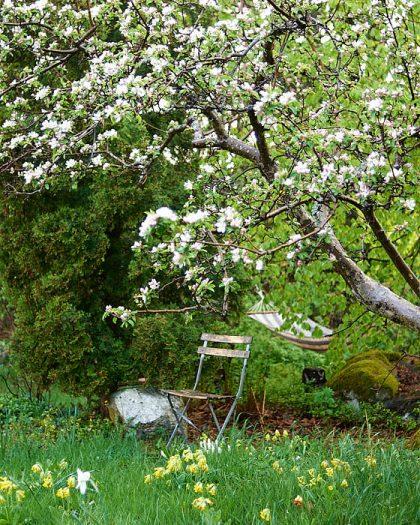I vår egen trädgård har vi medvetet låtit träd skapa tak och naturliga tunnlar på en handfull platser. Under det krökta äppelträdet har vi placerat en stol som blickfång.