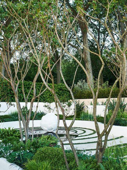 Få växter är så exotiskt som rönnsumak, Rhus typhina. Härdiga i Mellansverige, måste hindras från att skjuta rotskott över hela tomten. Växer långsamt, blir naturligt krökta och vridna. The Cancer Research UK Garden från Chelsea Flower Show 2007.