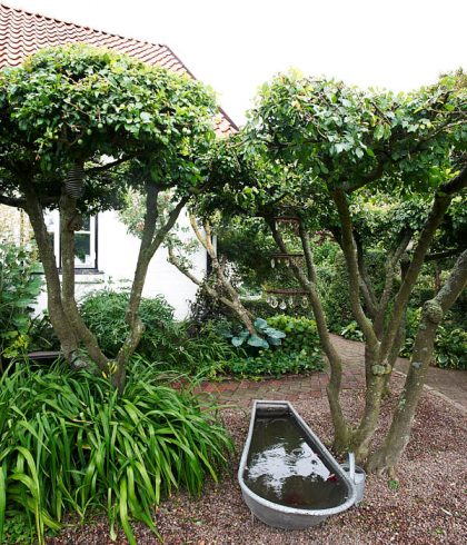 Inspirerad av de uppstammade körsbärsplommonen i en mycket känd trädgård, Ulla Molins i Höganäs, skapade Ingemo Gylling sin egen variant i Glumslöv. Som prydnad och blickfång placerades ett badkar under.