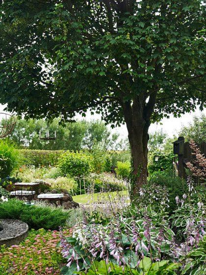 När Per och Margareta Baker skapade trädgård på Österlen sparades en stor lönn som vårdträd. Den stammades upp rejält och under fick plats med både uteplats och flödiga rabatter.