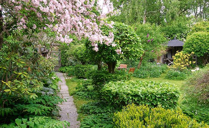 Rumslighet skapar man med hjälp av främst träd, buskar och perenner. Bild från den kände trädgårdsarkitekten Walter Bauers radhus på Lidingö som nu förvaltas av hans dotter konstnärinnan Lena Boije.