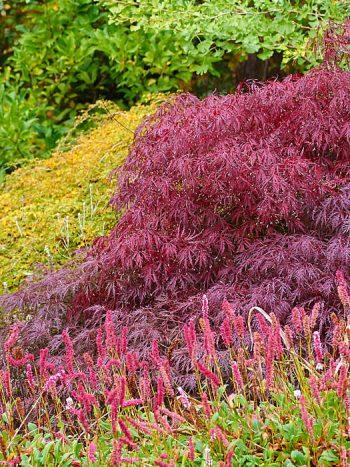 Färgglatt och frodigt även på hösten får den som planerar växtinköpen likt Walderö i Kungsängen.