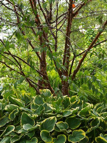 Välplanerade buskage, snyggt hela säsongen. Växsjö.