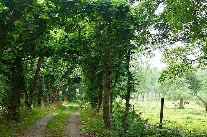 Grönskande lövverk, en mix av öppna och slutna ytor, och nötkreatur i bakgrunden ger inre lugn. Det är vårt ursprung från savannen som ger sig tillkänna.