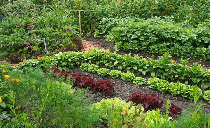 En köksträdgård ger inte bara goda grönsaker utan också tillfälle till motion. Salladen blir minsann extra smaklig efter man fått göra rätt för den.