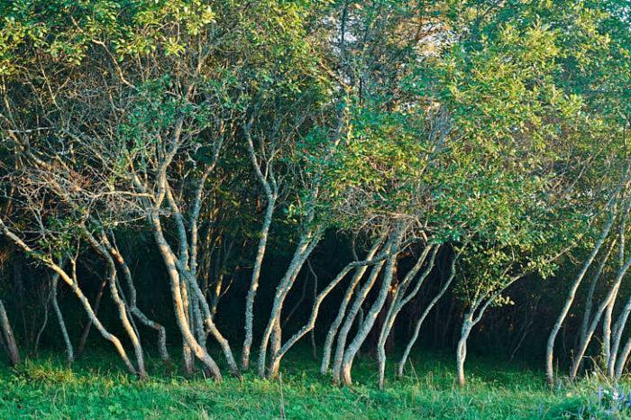 Plommonskogen, inspirerad av svenskan Ulla Molin, var det första Kerstin gjorde när hon skapade sin trädgård.