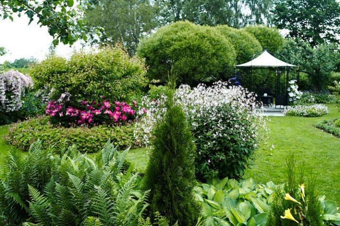 Vilken trädgårdstavla! Till vänster växer pioner under en ginnalalönn. Rakt fram bakom tujan en av de prakfullaste gillenior man kan få se, i bakgrunden paviljongen