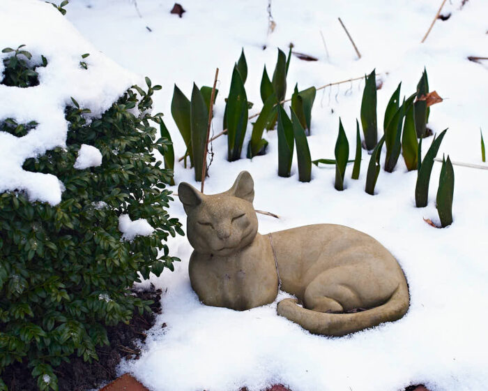 Till och med katter av betong njuter av buxbomsklotens sällskap fast det är snö ute.