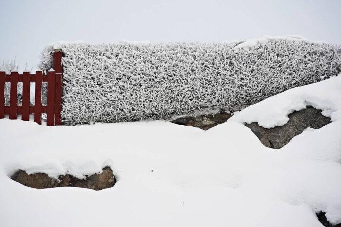 Tätväxande, välklippta häckar ger struktur och är tillräckligt slutna för att fungera som avgränsning även på vintern.