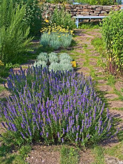Lite trångt får det gärna vara så att väldoften utvecklas när man passerar kryddväxterna och nuddar med vaderna, som på Capellagården på Öland.
