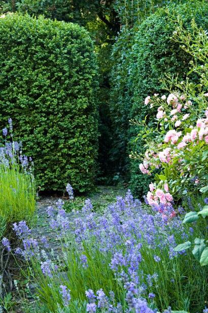 En kombination som nästan alltid är lyckad är att matcha rosa rosor med blåblommande perenner, till exempel lavendel, något som landskapsarkitekten Per Friberg gjort hemma i sin egen trädgård.