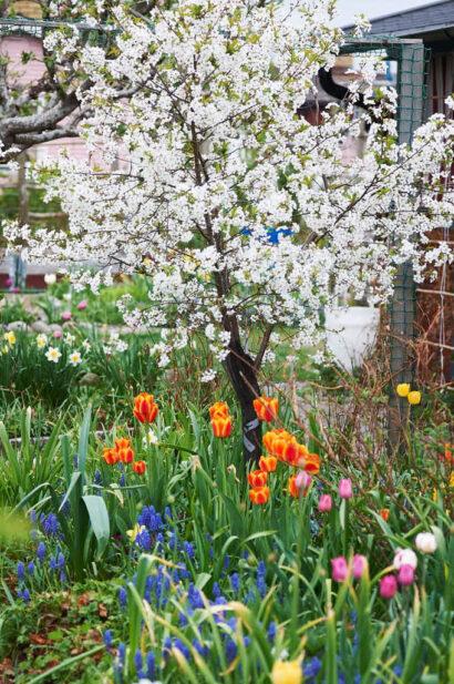 Det är den här tiden på året som det är bäst att anlägga rabatter, under våren.