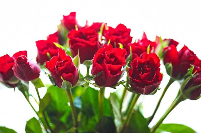 Även när det inte blommar i trädgården så finns i alla fall röda rosor som snittblommor att förgylla tillvaron med.