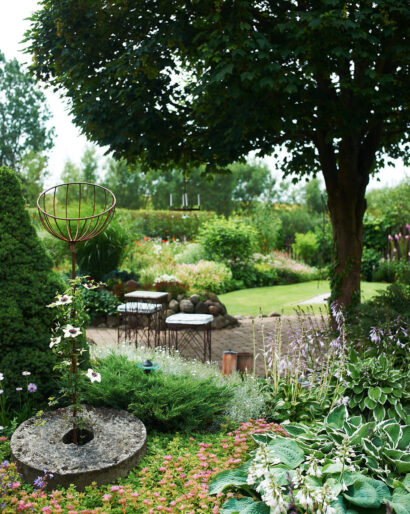 Trädgården är uppbyggd kring den välväxta lönnen. Per har skurit in den och skapat en krona med luft och utrymme.