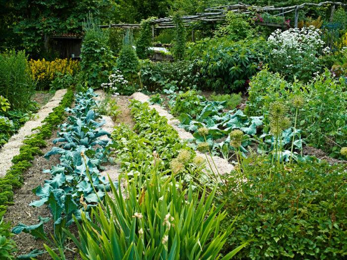 Redan i början av juli har grönsakerna skjutit fart, det gäller inte bara nyttoväxter utan till minst samma grad perenner.